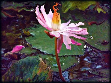 lotus-fire-chris-crowley